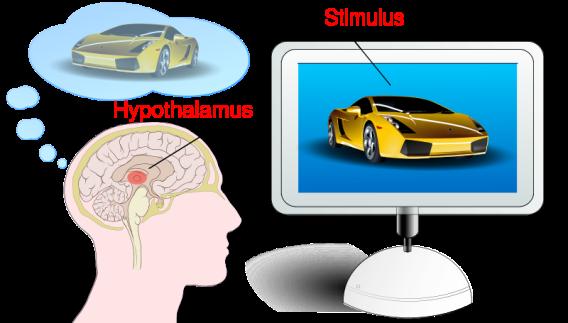 Pubblicità e Neuromarketing