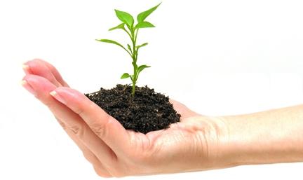 Coltivare e far crescere un blog